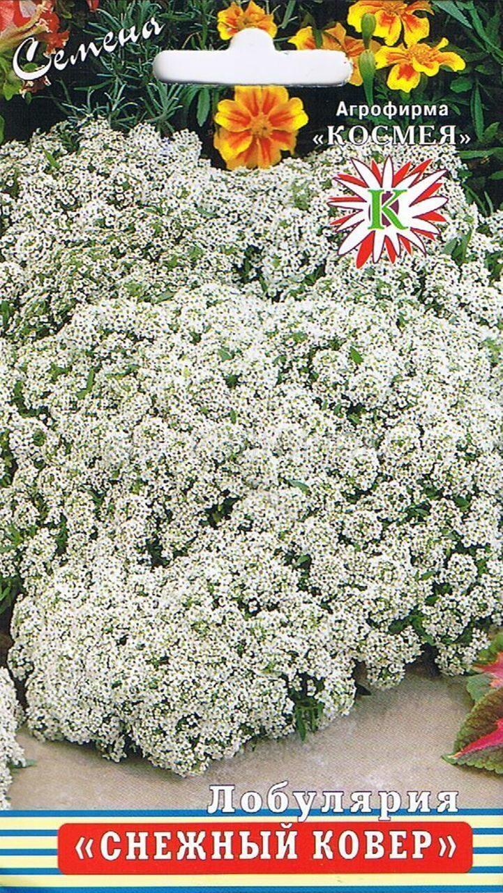Лобулярия королевский ковёр выращивание из семян 80